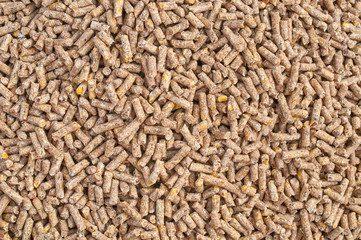 Medical Feed Additives Market