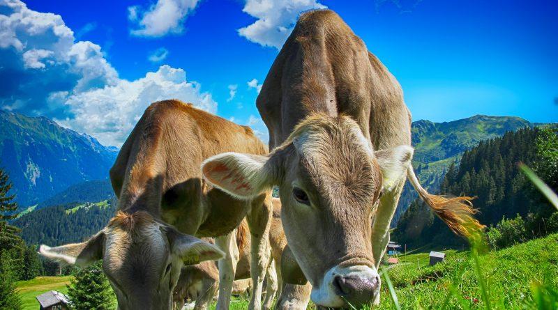 Bovine Mastitis Drugs & Diagnostics Global Market Report