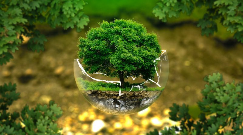 Global Environment, Conservation And Wildlife Organizations Market