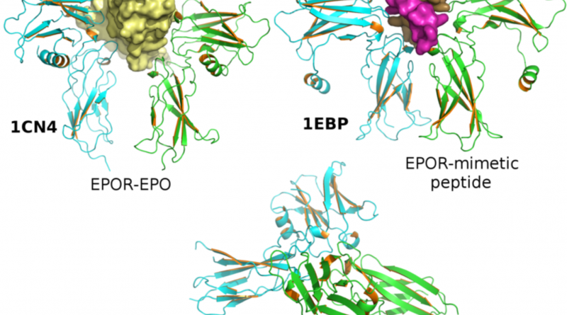 Global Erythropoietin (EPO) Market