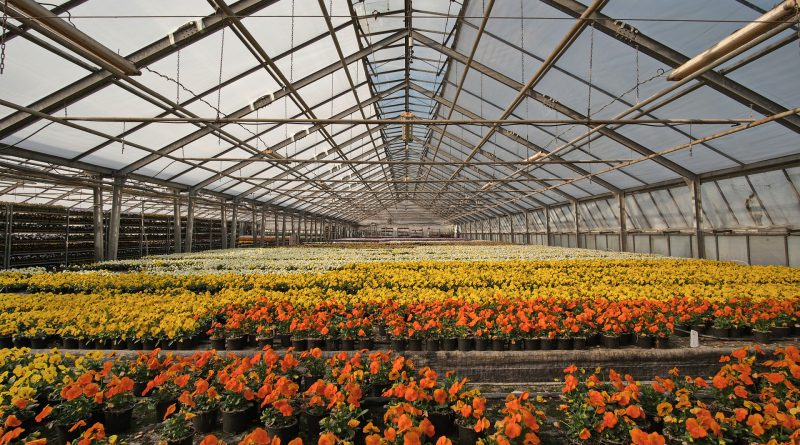 Greenhouse, Nursery, And Flowers Market