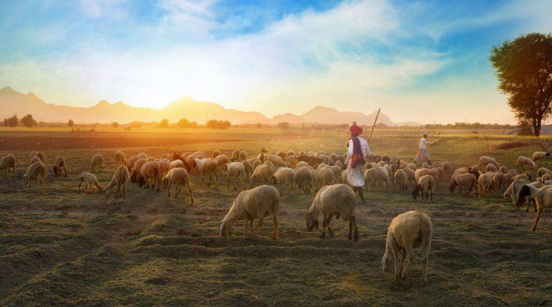 Global Rural Activities Market Size