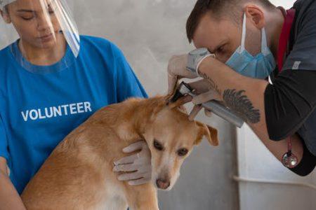 Veterinary Diagnostic Equipment Market
