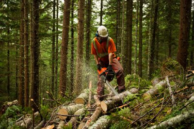 Forestry And Logging Market